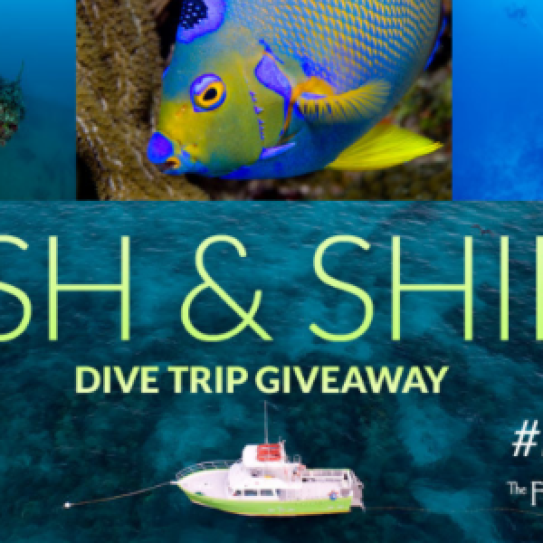 Win A Diving Vacation in Key West
